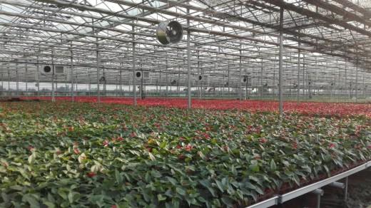 湖北农青园艺科技有限公司